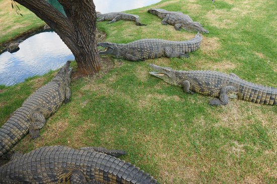 Fourways, Νότια Αφρική:                   Middle-aged crocs. Their ferrari's are parked behind.