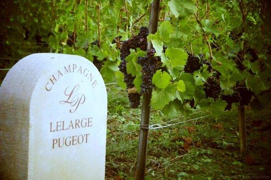 Champagne Lelarge-Pugeot