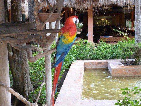 Iberostar Tucan Hotel: Les perroquets de l'accueil