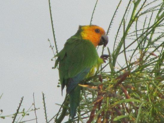birds in back yard each morning