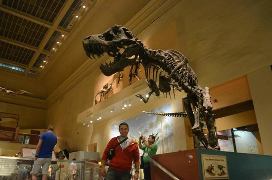 National Museum of Natural History:                   Rexy my big friend! it was just like Jurasic Park or Night at the Museum :-)