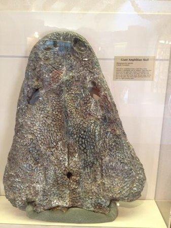 Museum of Northern Arizona:                   skull