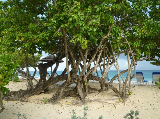 Spice Island Beach Resort: Only yards from the room to the beach