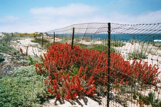 Monterey Tides, a Joie de Vivre hotel: Dunes vegetation