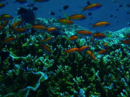 Cakalang Bunaken:                                     Diving