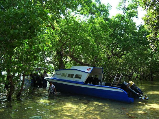 Cakalang Bunaken:                                     Diving speed boat