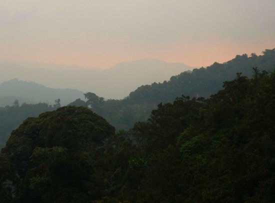 Green Hills Ecotours - Day Tours:                                                       Nyungwe Forest