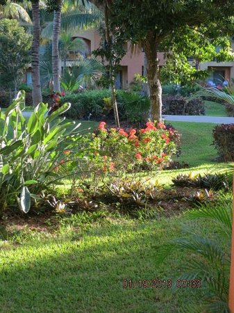 Barcelo Maya Tropical:                   this is typical the garden views