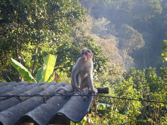 Thekkady - Woods n Spice, A Sterling Holidays Resort:                   little blighters are everywhere,