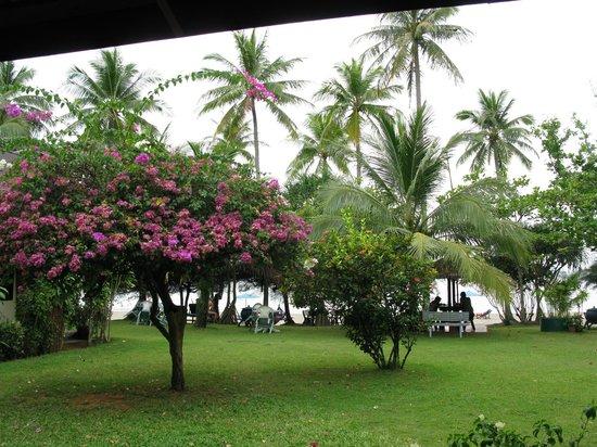 Sukorn Beach Bungalows: Gelände Richtung Strand