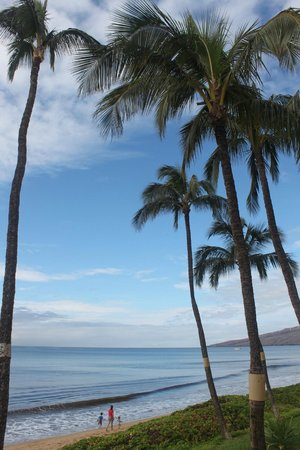 Kihei Sands Beachfront Condominiums:                   Great walking beach