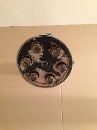 The Paramount Hotel:                                     Revolting shower head