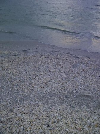 South Seas Island Resort:                   ocean, beach, shells
