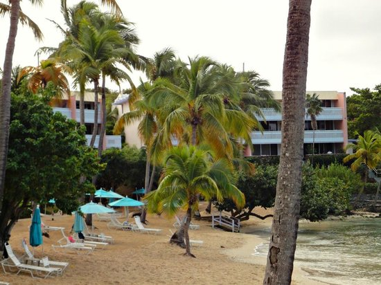 Secret Harbour Beach Resort:                   Palm Trees and beach view