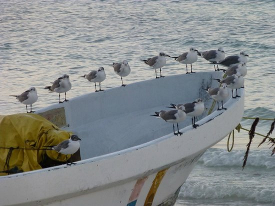 Holbox Hotel Casa las Tortugas - Petit Beach Hotel & Spa : Birds waiting for the Fishermen
