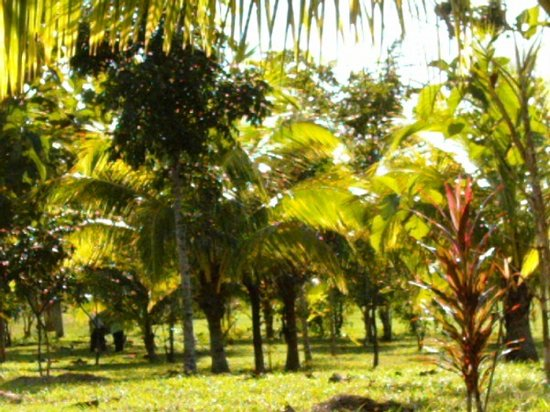 Super Palm Resort: Exterior
