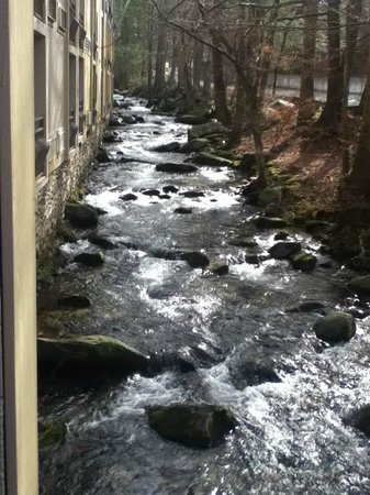 Sidney James Mountain Lodge:                   The creek that runs beside the bolcony