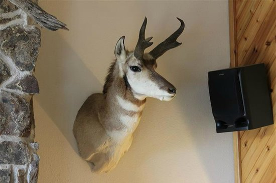 Yellowstone Village Inn: Mounted pronghorn head in lobby.