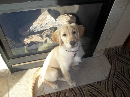 Shilo Inn Suites Hotel - Seaside Oceanfront: Our puppy in front of the fireplace