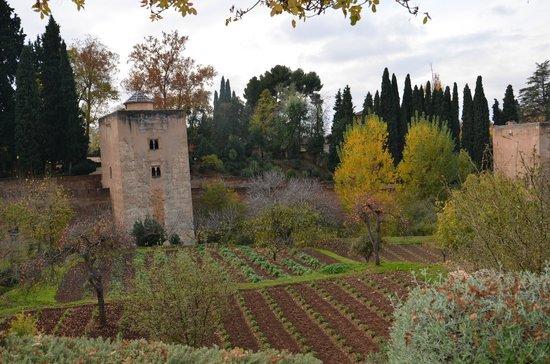 Parador de Granada:                   hacia el generalife