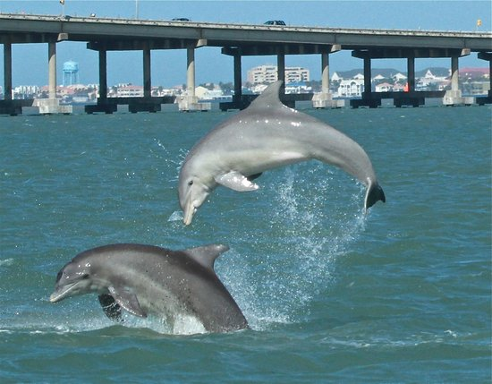 South Padre Island, TX: Dancing with our Dolphin Tribe