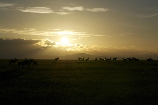 Naboisho Camp, Asilia Africa:                   love this photo!