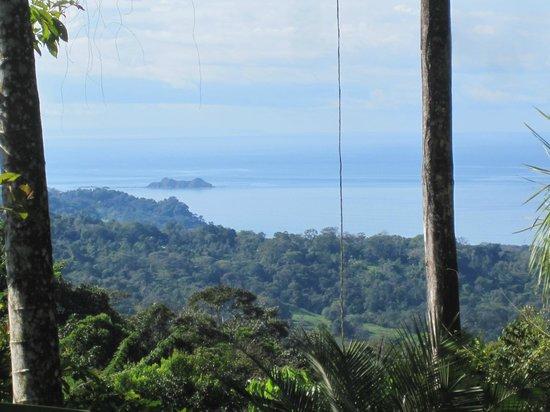 أوكسجين جنجل فيلاز:                   view from villa #3                 