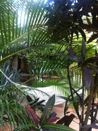 La Casa del Guamuchil:                   hamaca