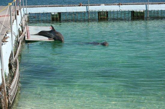 Playa Sirena:                   Бени и Луна греются на солнышке по переменке))