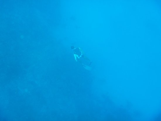Infinity Bay Spa and Beach Resort:                   Avi on another deep freedive for Lionfish...