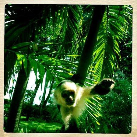 Tucan Terra:                                     Monkeys on the doorstep