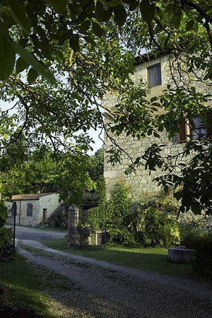 Tenuta di Corsano:                   from the garden