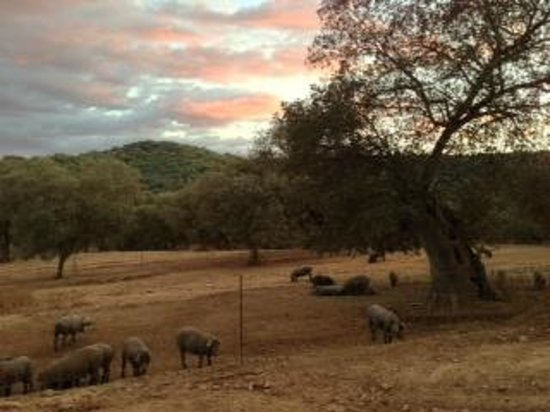 A Taste of Spain Culinary Tours - Andalusia :                   Sunset at Heulva with iberico piggies