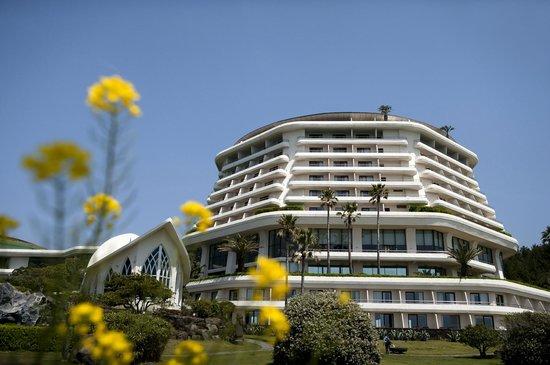 Hyatt Regency Jeju: 하얏트 리젠시 제주 봄꽃 전경