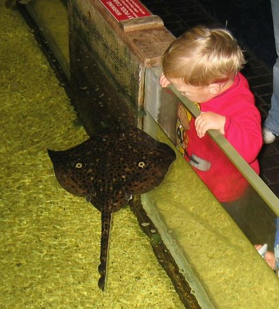 ... - Photo de Lake District Coast Aquarium, Maryport - TripAdvisor