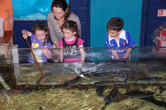 ... : fotograf?a de Lake District Coast Aquarium, Maryport - TripAdvisor