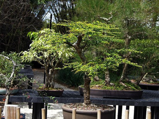 A bonsai plant in their miniature garden. - Picture of Morikami ...
