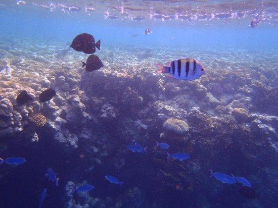 Jaz Dar El Madina:                                     Reef