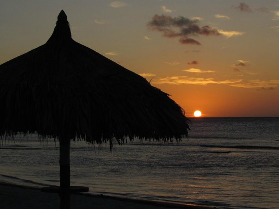 Divi Aruba Phoenix Beach Resort:                   Watch the sun set from under a palapa