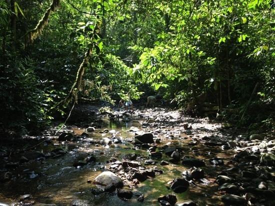 เขื่อนเชี่ยวหลาน (เขื่อนรัชชประภา): jungle hike