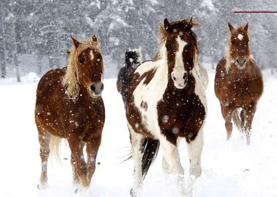 Vista Verde Guest Ranch: Our horses love winter in Colorado