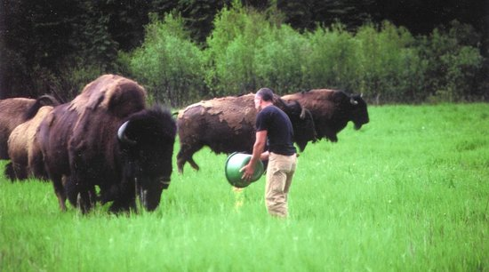 Rocky Mountain Buffalo Ranch & Guest Cottage Buffalo Tours: My old friend Chester, his son Chester jr. now follows in his path
