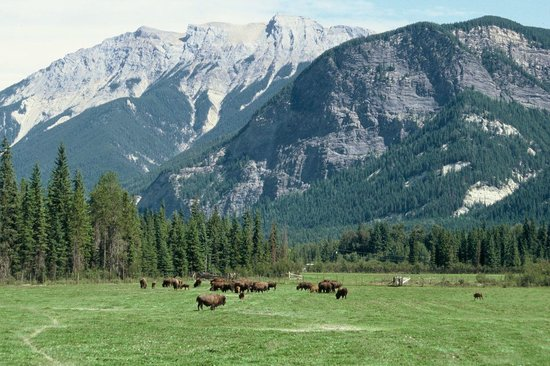 Rocky Mountain Buffalo Ranch & Guest Cottage Buffalo Tours 사진