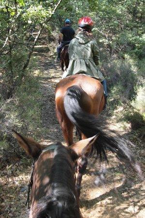 Horseback riding in Tuscany Wine Tasting :                   muddy road