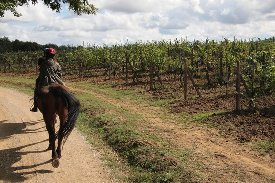 Horseback riding in Tuscany Wine Tasting :                   vineyards in autumn