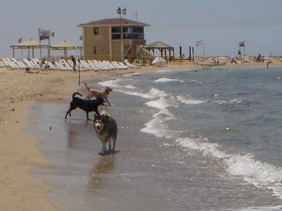 Sheraton Tel Aviv Hotel: playa solo para perros