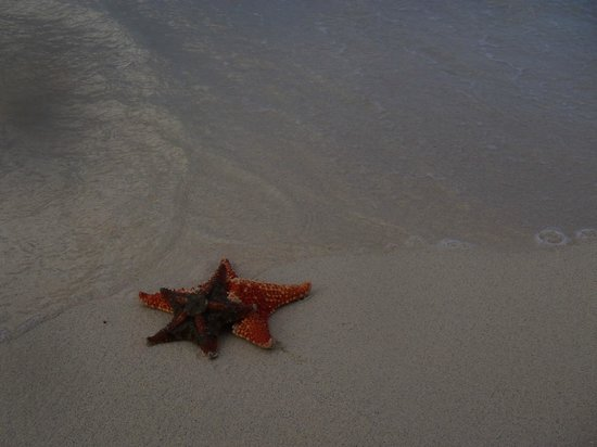 Secrets Wild Orchid Montego Bay: Star fish are everywhere