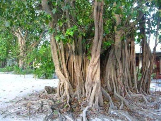 Adaaran Select Hudhuranfushi:                   флора