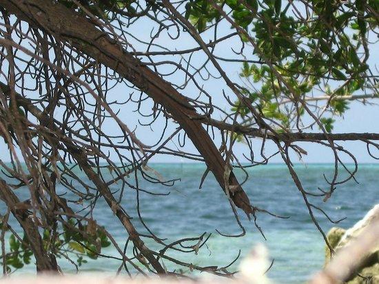 Adaaran Select Hudhuranfushi:                   океан