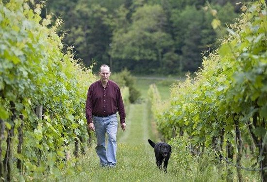 Cave Ridge Vineyard: A walk in the field